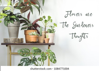 Modern composition of home garden with different plants in red clay pots on the brown shelf. Copy space on the white background.