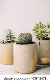 Modern concrete planter with succulent on marble background