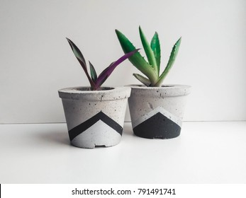 Modern concrete planter with succulent on white background