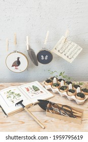 Modern country interior. Gardening, Planting at home. Table with garden tools, botanical book and sprouts. The spring planting. Early seedling. Fresh sprouts, seedling plants in eggshells.