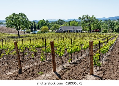 Modern day farmhouse / winery, on the scenic hills of the California Central Coast where vineyards grow a variety of fine grapes for wine production, near Paso Robles, CA. on scenic Highway 46.