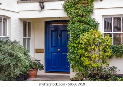 modern entrance to the building with stylish walls, the square metal pots with green plants, the entrance from the sidewalk to the building, a large blue door