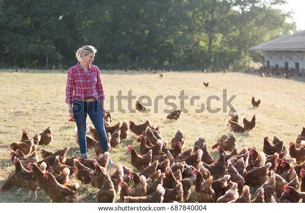 modern female farmer working with chicken