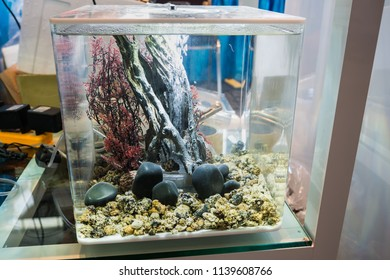 Modern fish tank is suitable for rooms that are not very large.