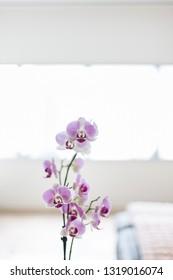 A modern floral design