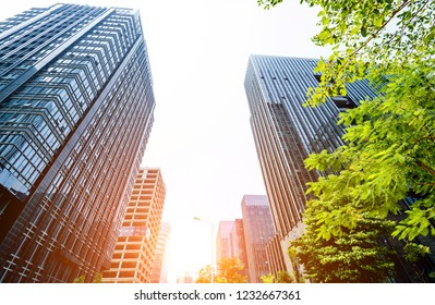 Modern glass buildings and green tree branches.