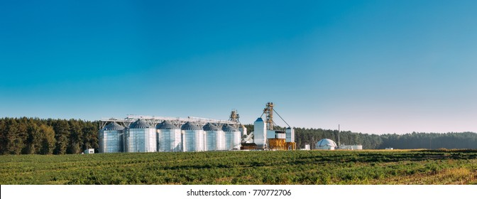 Modern Granary, Grain-drying Complex, Commercial Grain Or Seed Silos In Sunny Summer Rural Landscape. Corn Dryer Silos, Inland Grain Terminal, Grain Elevators Standing In A Field. Panorama