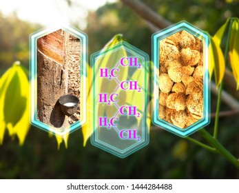 Modern graphic box of Rubber tapping tree and molecule of polymer, lumps under Hevea brasiliensis leaf background, design for website. vertical cutout lines and trading concept