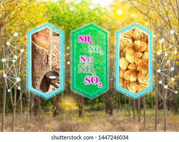 Modern graphic box of Rubber tapping tree and molecular of nutrient, lumps under Hevea brasiliensis farm leaf background in autumn season, design for website.vertical cutout lines and trading concept