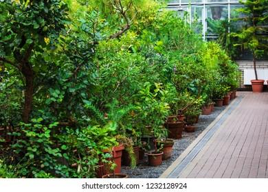 modern greenhouse with beautiful ornamental plants