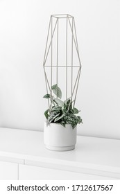 Modern houseplants on a white drawer in the white living room, minimal creative home decor concept, Scindapsus Pictus Silver Lady trailing on a modern metal plant support