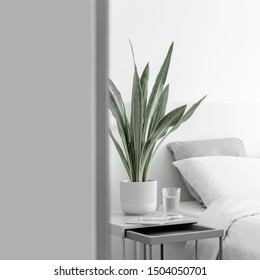 Modern houseplants in the white bedroom, minimal creative home decor concept, Sansevieria Metallica Siam Silver or snake plant