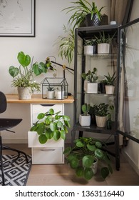 Modern industrial black and white study room with numerous green houseplants such as pancake plants and cacti creating an urban jungle feeling.