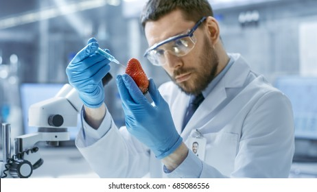 In a Modern Laboratory Food Scientist Injects Strawberry with a Syringe. He's Working on a Genetic Modifications of this Product.