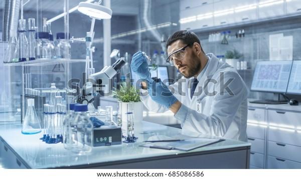 В современной лаборатории научный сотрудник проводит эксперименты синтезирующими соединениями с использованием капельницы и растения в пробирке.