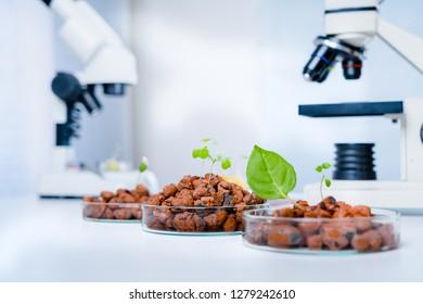 Modern Laboratory .Vegetables in hydroponics  tech picks