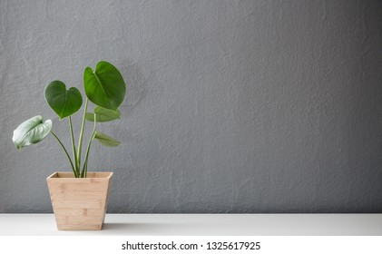 Modern leafy plant in wooden pot against gray wall