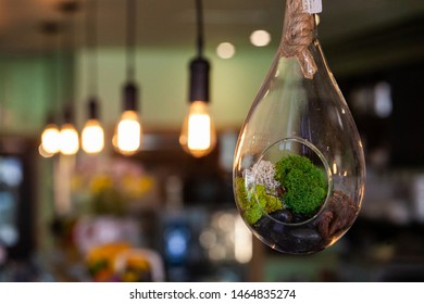 Modern light bulb in eco-friendly bistro. Natural decoration inside a hanging glass globe is viewed closeup in an ecofriendly establishment. Blurry lights are seen hanging in background with copyspace