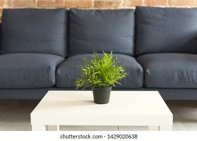 Modern living room interior. Flowerpot on the white coffee table. Green plant in a black flowerpot on the table. Modern blue sofa with cushions.