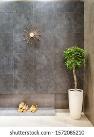 Modern loft-style interior with porcelain stoneware tile and ficus benjamin in a large white pot