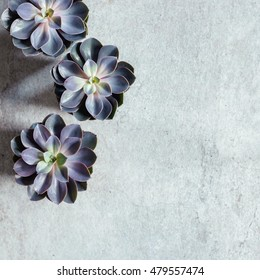 Modern, minimalist composition with succulent plants on concrete floor. Top down view.