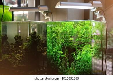 modern nano aquarium aquascape with plants. professional landscape design for aquarium.