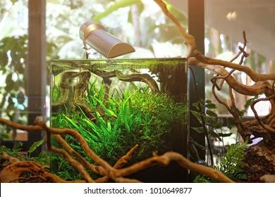 modern nano aquarium aquascape. professional landscape design for aquarium.
