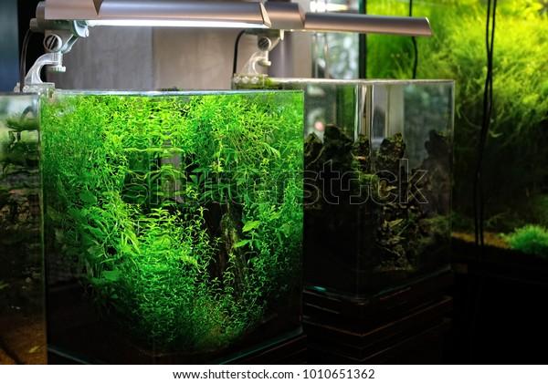Modern Nano Aquarium Aquascape Professional Landscape Stock Photo Edit Now 1010651362