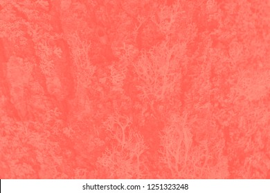 Modern natural background or mock up with space for text. Texture of wood overgrown with lichen in color of the year 2019 Living Coral pantone