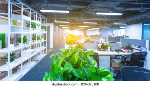 Modern open space office?some green plants