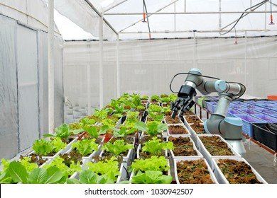 Modern organic farmhouse adopts the technology of robotic industry to apply for used in vegetable plots to work and help harvest on  concept of Smart Farming  4.0 and Industry 4.0.