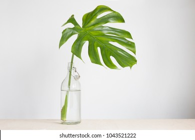 Modern plant in a glass vase. Monstera palm leaf in white interior.