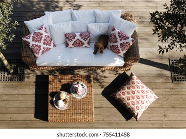 modern relax couch  in the garden with pretty dog