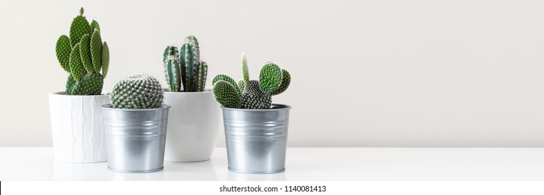 Modern room decoration. Various cactus house plants in different pots against white wall. Banner with copy space.