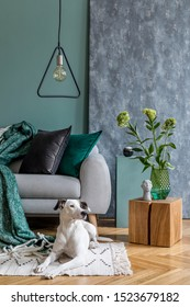 Modern scandinavian home interior of living room with gray sofa, wooden cube, flowers in vase, sculpture, pillows and elegant personal accessories. Stylish home decor. Dog lies on the carpet. Template