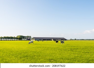 Modern stable with grazing cows in the meadow on a sunny day in the late spring season.