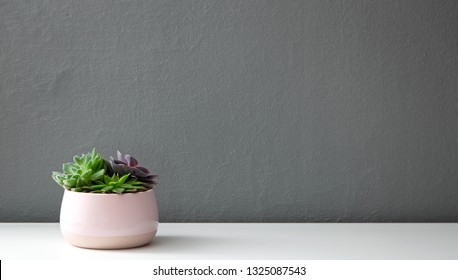 Modern succulent plants in pink pot against gray wall