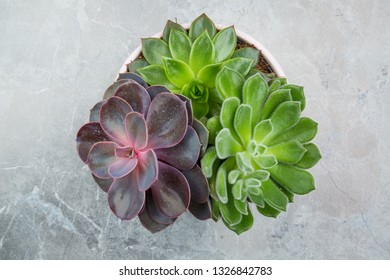 Modern succulent plants in pot on grey stone, overhead view