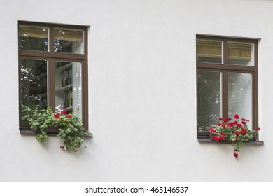 Modern windows with pot of flowers on white wall background.