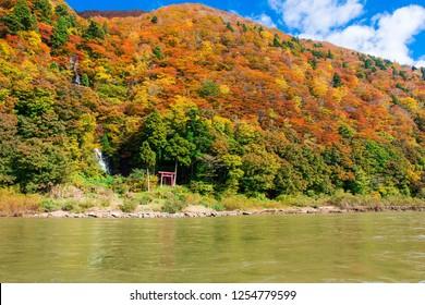 mogami river and autumn leaves, yamagata, japan
