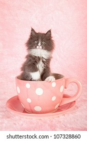 Moggie kitten sitting in large pink polka dot cup with saucer on pink background