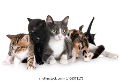 moggy kitten and mother in front of white background