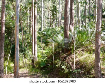 Mogo State Forest New South Wales