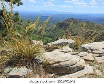 Mogollon Rim, Coconino National Forest, Yavapai County, Arizona.