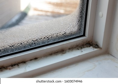 Moist mold and fungus in window rotting away frame