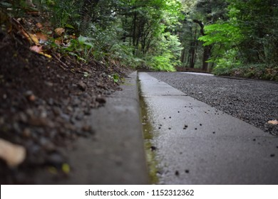 Moist pathway in forest