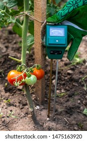Moisture meter tester in soil. Measure soil for humidity on tomato plants with digital device. Woman farmer in a garden. Concept for new technology in the agriculture.
