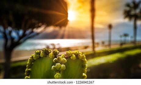 Mojacar Promenade at sunrise