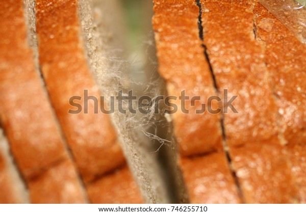 Mold in bread. Rough bread. Corrupted substandard