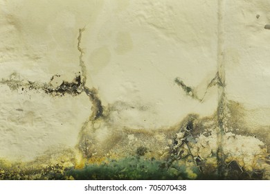 Mold buildup on the wall texture